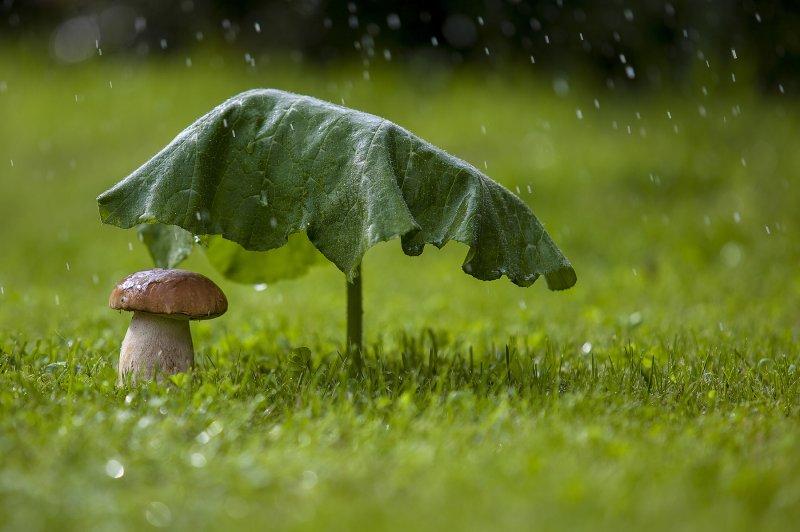 Дожди и похолодание ожидается на выходных в Заполярье