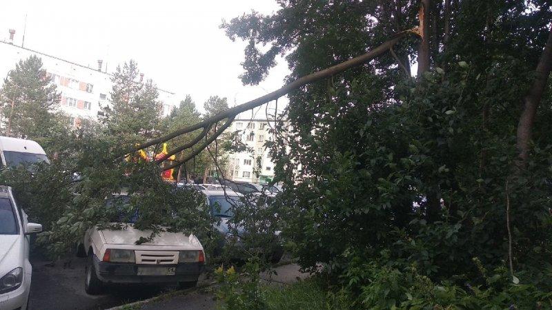 Рухнули деревья из-за урагана в Кировске