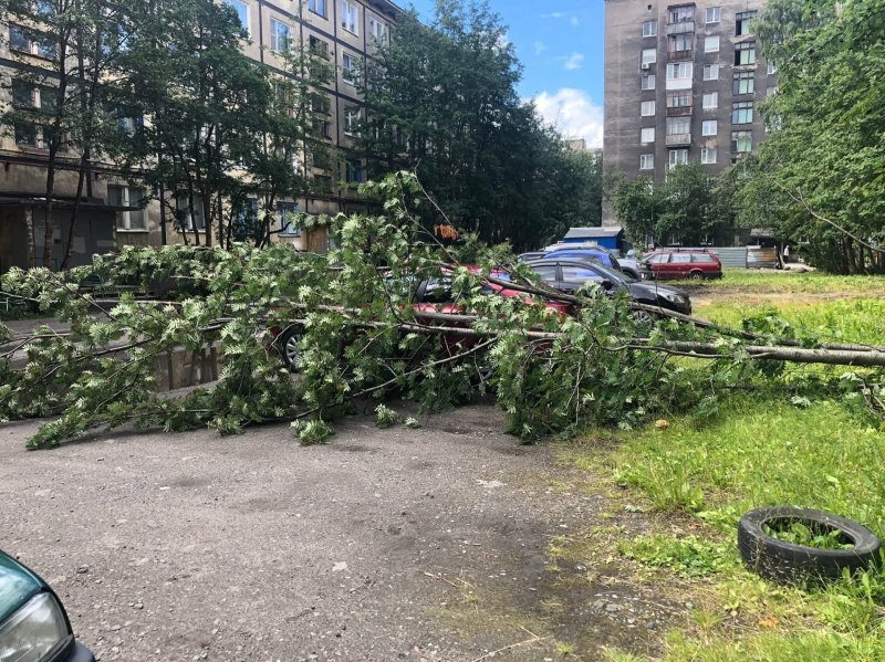 Рябина упала на автомобиль в мурманском дворе