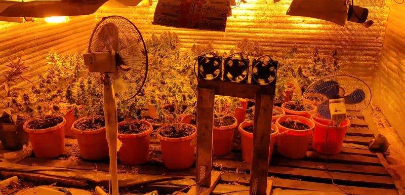 Наркотическую ферму оборудовал северянин в гараже в Коле