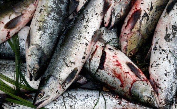 Рыбаки сдали 30 тонн рыбы в Умбе