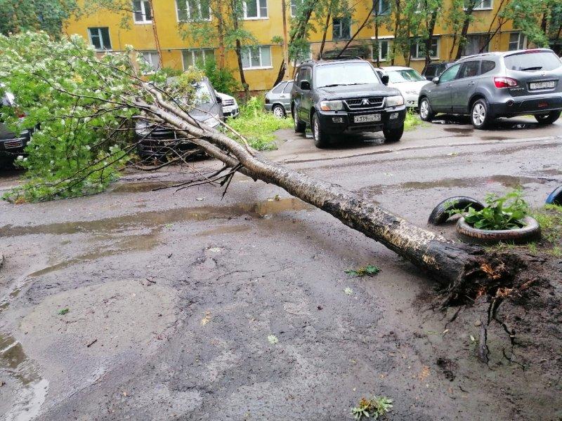 Повалило ветром деревья в Мурманске