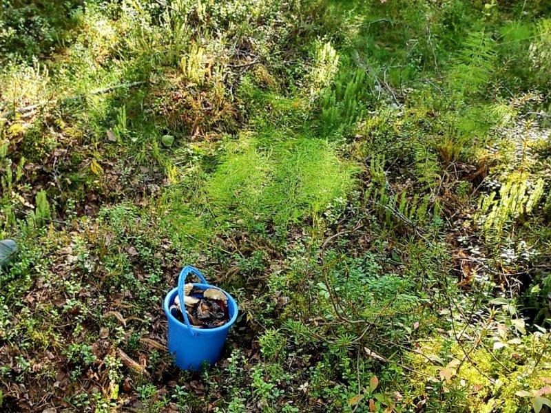Следком проводит проверку по факту обнаружения в лесу тела пенсионерки в Туломе