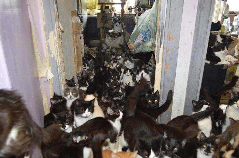 40 кошек остались в квартире одни в Лувеньге