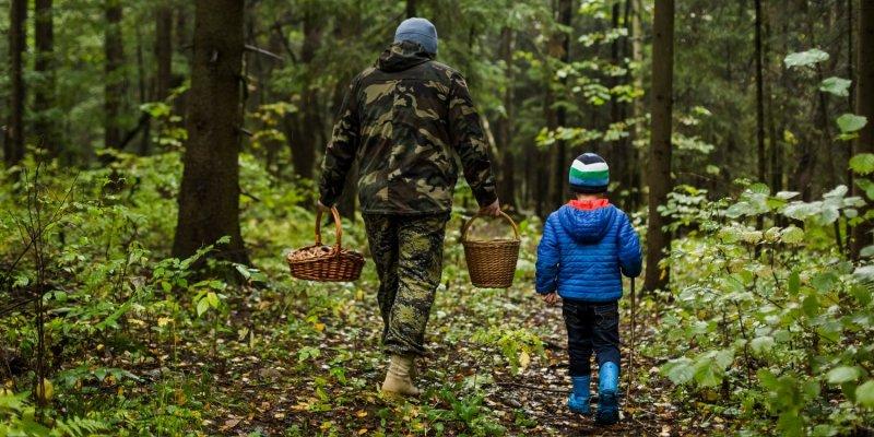 Северянка с сыном потерялась в лесу под Североморском