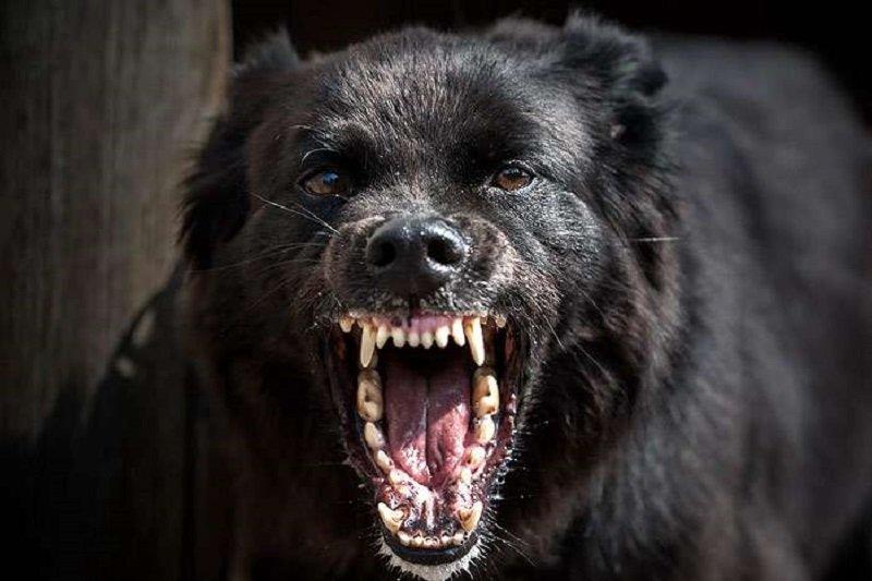 Северяне попросили администрацию Кировска решить проблему бездомных собак