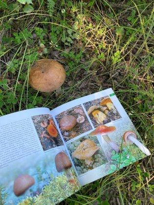 374 вида грибов растут в заповеднике «Пасвик»