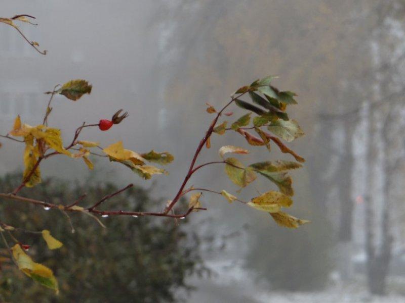 Арктические массы принесут в Мурманск ветер и -3°