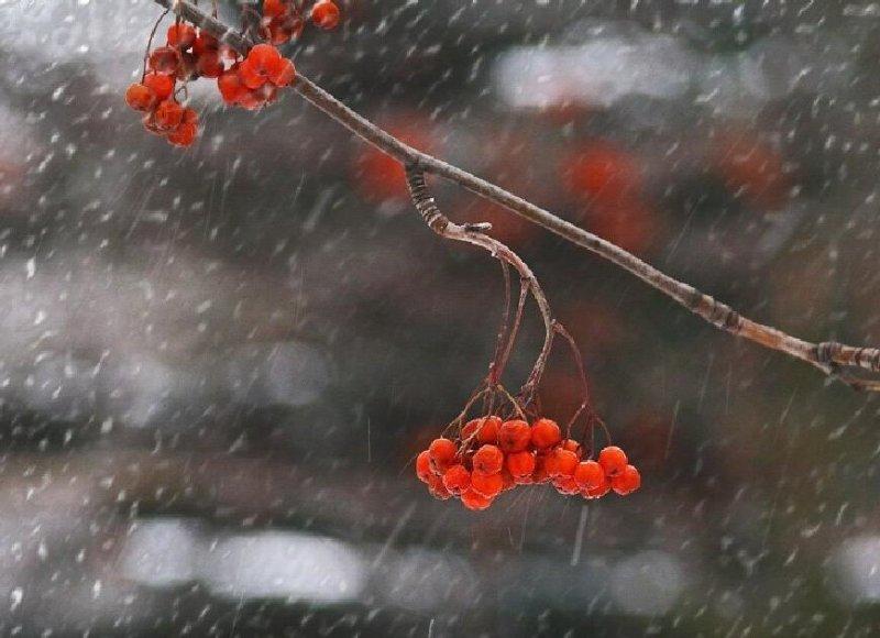 Мокрый снег и -6° прогнозируют в Мурманске